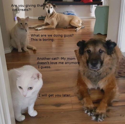 four pets.jpg