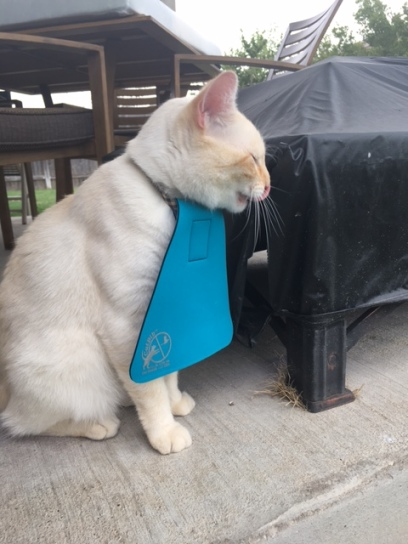 Cat bib outside